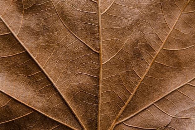 아름답고 상세한 매크로 잎 프리미엄 사진