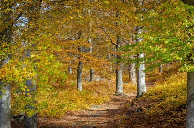 Красивый и завораживающий снимок леса, медленно становящегося золотым осенью Бесплатные Фотографии