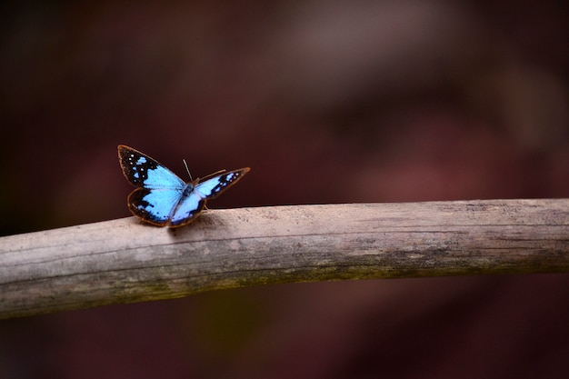 Beautiful animal butterfly blue colorful Free Photo