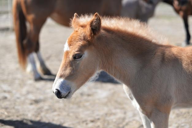Красивые животные пони лошадь коричневые прогулки на природе в зоопарке Premium Фотографии