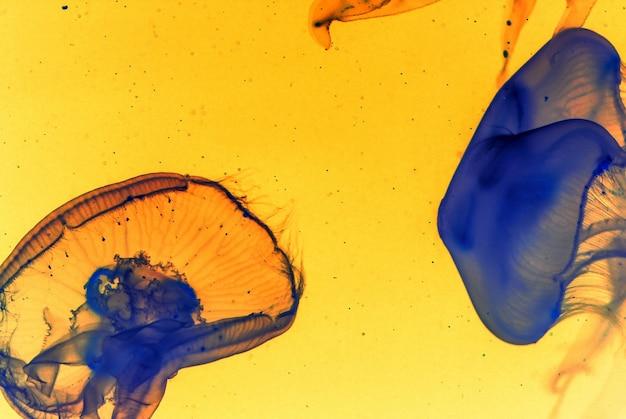 Bella arte di due meduse blu su uno sfondo giallo Foto Gratuite