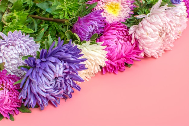 Beautiful aster flowers on pastel pink color background. flat lay, Premium Photo