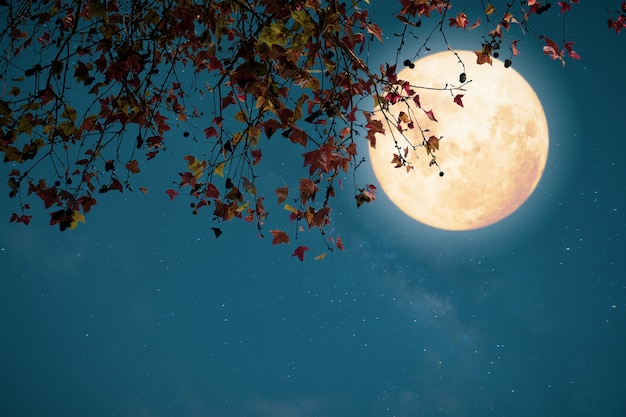 Beautiful autumn fantasy, maple tree in fall season and full moon with star. retro style with vintage color tone. Premium Photo