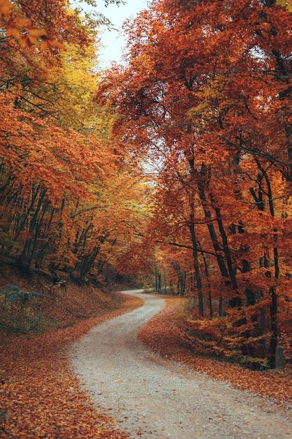 Красивый осенний лес горной тропе Premium Фотографии