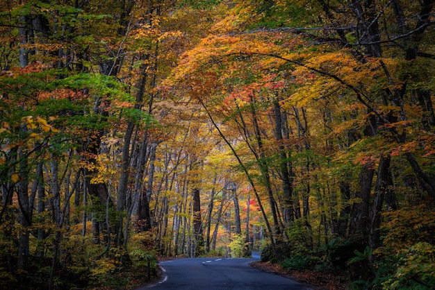 青森県の美しい秋の森の風景 無料写真