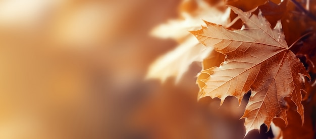 Beautiful Autumn Leaves on Autumn Red Background Sunny Daylight Horizontal Free Photo