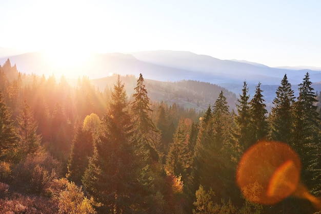 Beautiful autumn morning on view point above deep forest valley in carpathians, ukraine, europe. Free Photo