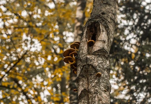 Красивые осенние грибы на дереве Бесплатные Фотографии