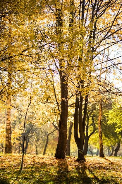 美しい秋の公園。秋の木々や葉。秋の風景です。秋の公園。秋の森。 無料写真