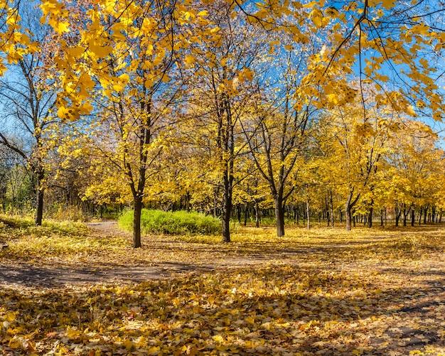 もみじの路地と美しい秋の公園 Premium写真
