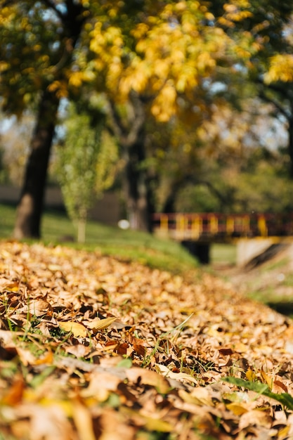 Beautiful autumn scene with blurred park background Free Photo