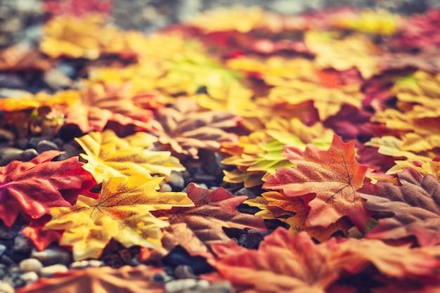 Beautiful autumn season leaves Premium Photo