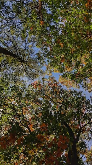 Bellissimi alberi autunnali con foglie colorate su un cielo blu chiaro Foto Gratuite