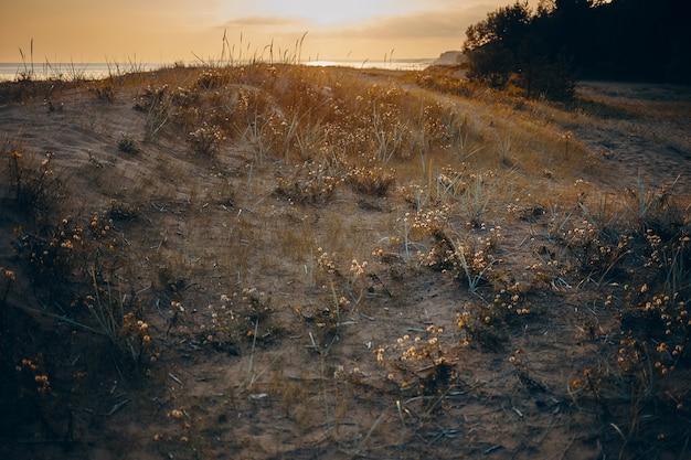 일몰 야생 자연의 아름 다운 단풍 풍경입니다. 해돋이에 마른 잔디와 황량한 슬로프의 경치를 볼. 무료 사진