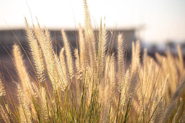 日の出の野原植物の美しい背景。 無料写真