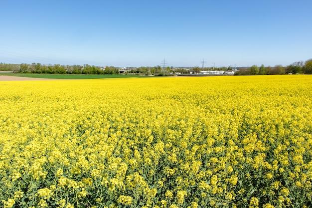 Красивое корковое поле с зелеными полевыми цветами и голубым небом Бесплатные Фотографии