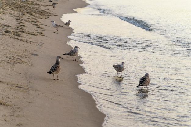 Concetto di lifestyle bellissima spiaggia Foto Gratuite