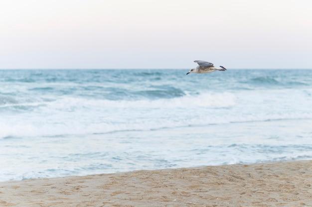 カモメが飛んでいる美しいビーチの風景 無料写真