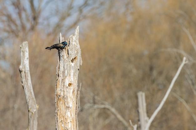 Красивая птица, стоящая на дереве Бесплатные Фотографии