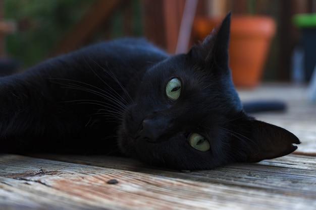 카메라를보고 녹색 눈을 가진 아름 다운 검은 고양이 무료 사진