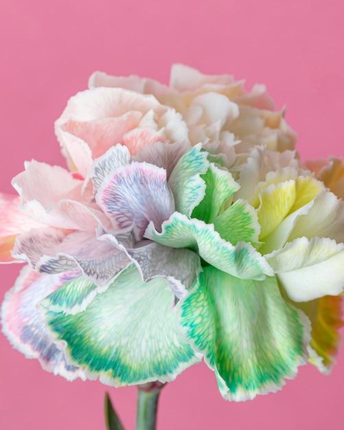 美しい花のクローズアップ 無料写真