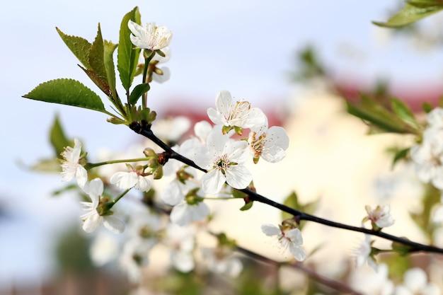 Beautiful blooming flower Free Photo