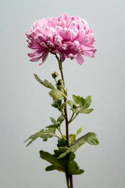 美しい咲くピンクの花 無料写真