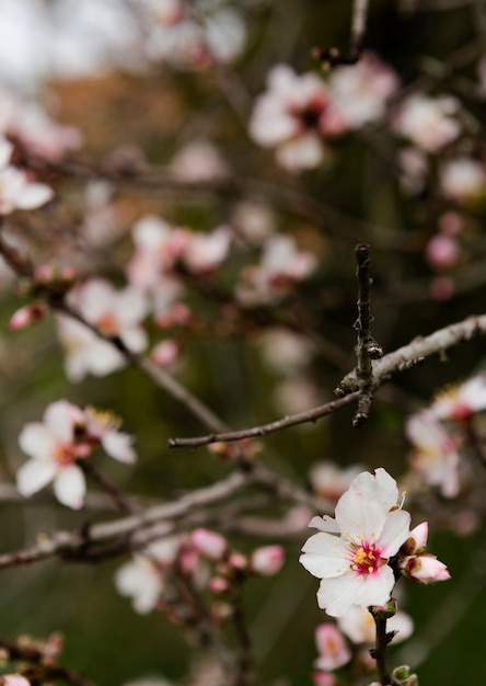 Beautiful blooming tree outdoors Free Photo