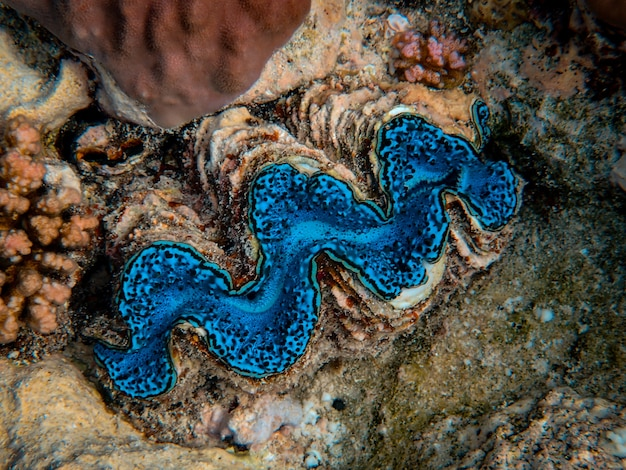 Beautiful blue coral at the bottom of the sea Free Photo