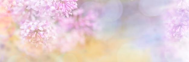 招待状やグリーティングカードのボケ味を持つライラック色の花の美しいぼやけた黄色ピンクデザイン枠。ぼやけたライラックの枝のクローズアップ。ソフトフォーカス。テキストのスペースをコピーします。ワイドバナー。 Premium写真