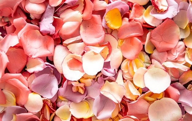 Beautiful bright background of fresh rose petals. Free Photo