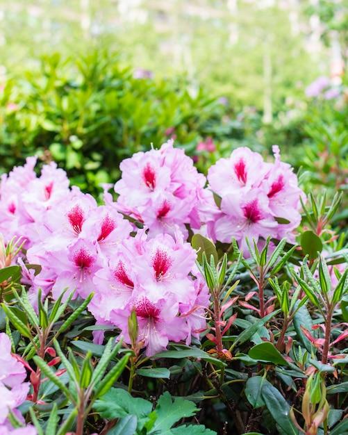 街の美しい明るい色、街の景観の造園と花の装飾 Premium写真