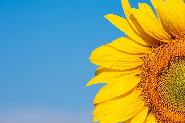 Красивый ярко-желтый подсолнух на небе Бесплатные Фотографии