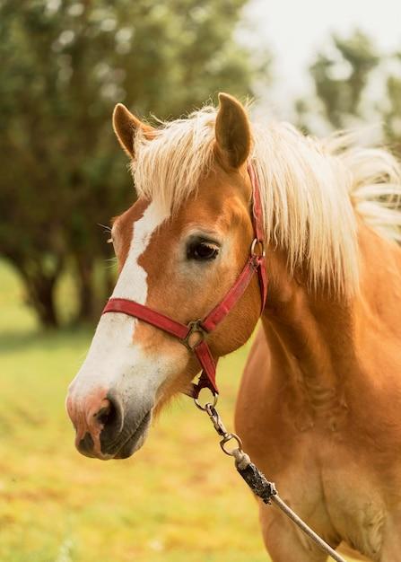 Bellissimo cavallo marrone all'aperto Foto Gratuite
