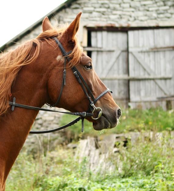 Красивая коричневая лошадь Бесплатные Фотографии
