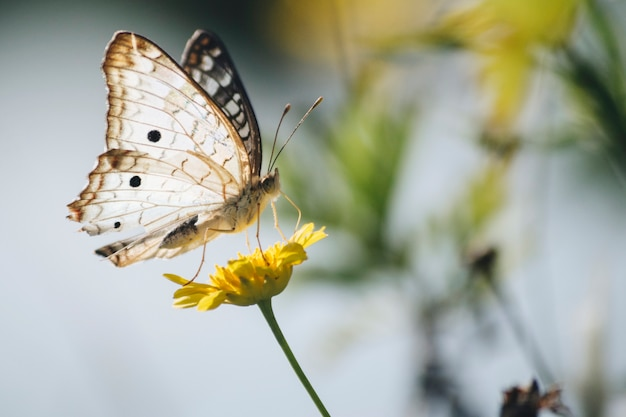 Beautiful butterfly on dandelion Free Photo