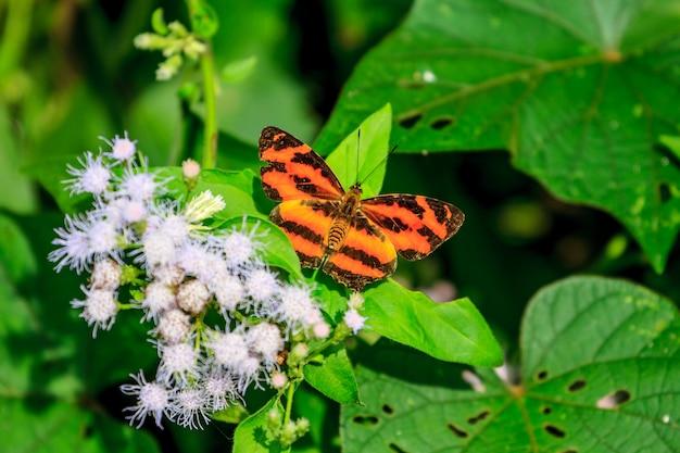 Красивая бабочка в лесу Premium Фотографии