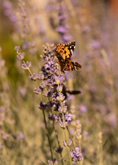 Красивая бабочка в природе концепции Бесплатные Фотографии