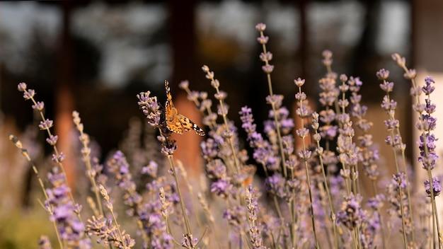 Красивая бабочка на цветке в природе Бесплатные Фотографии
