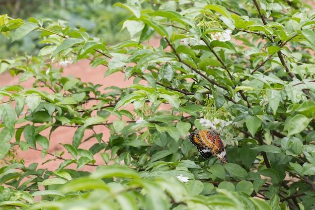 Красивая бабочка на белом цветке размыто или размыто мягкий фокус Premium Фотографии