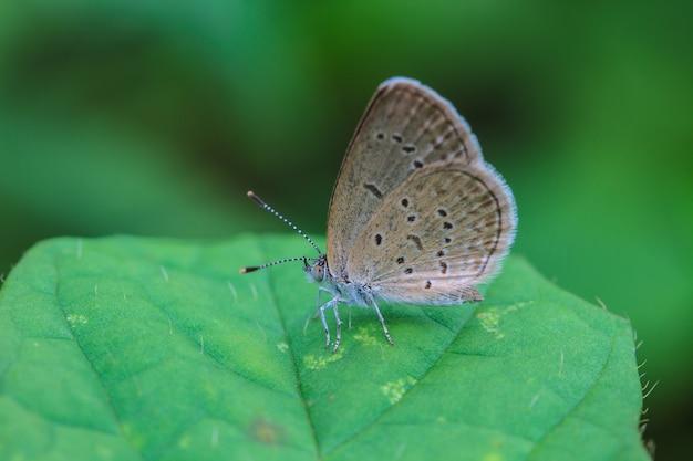 Прекрасная бабочка Premium Фотографии