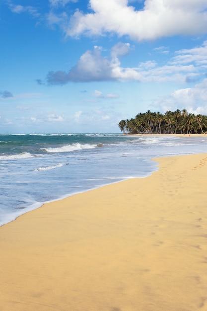 Красивый карибский пляж летом с пальмами Бесплатные Фотографии