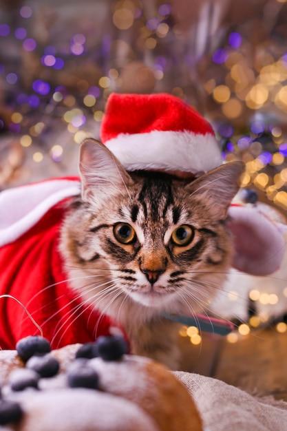 Красивый кот в шляпе санта-клауса. Premium Фотографии