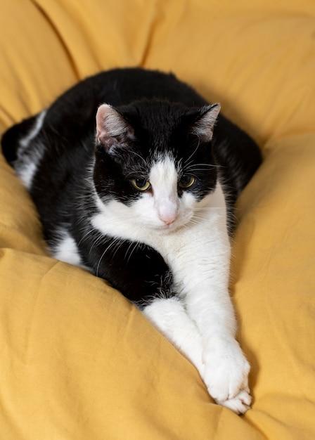 Bellissimo gatto posa sul cuscino Foto Gratuite