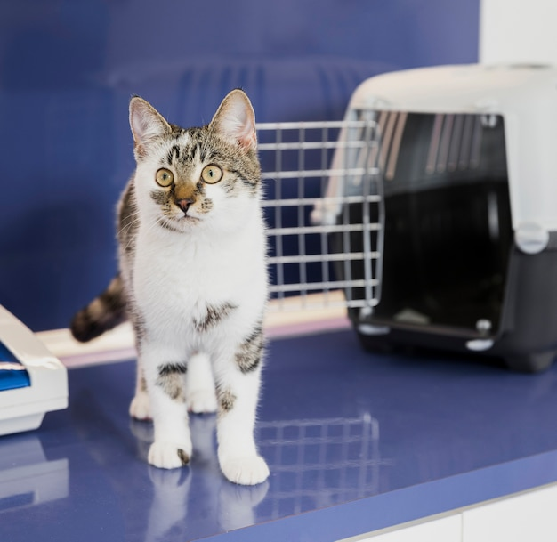 Beautiful cat with cage at veterinary clinic Free Photo