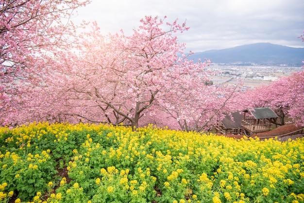 Beautiful cherry blossom in matsuda , japan Premium Photo