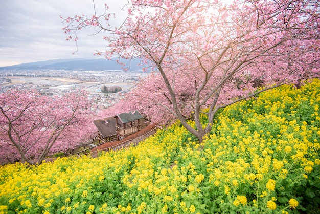 Beautiful cherry blossom in matsuda , japan Premium Photo