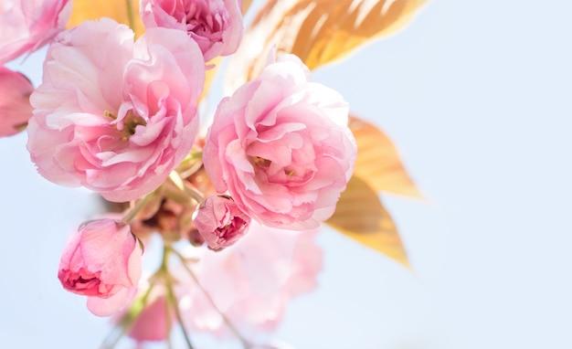 Bella ciliegia Foto Gratuite