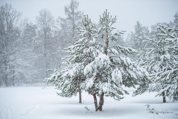 白い自然の背景に美しいクリスマスツリー。雪に覆われた木々や雪の結晶と冬の風景。 Premium写真