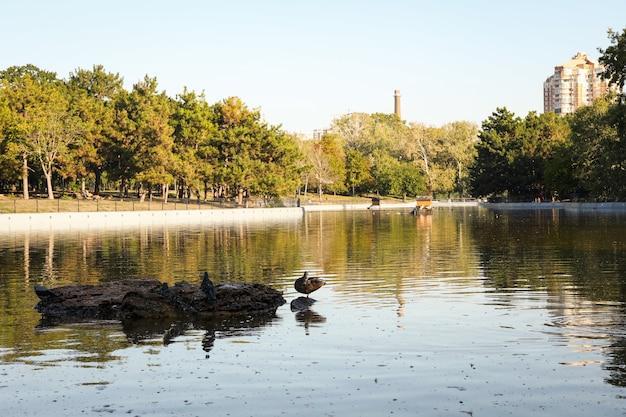 晴れた朝に湖のある美しい都市公園 Premium写真
